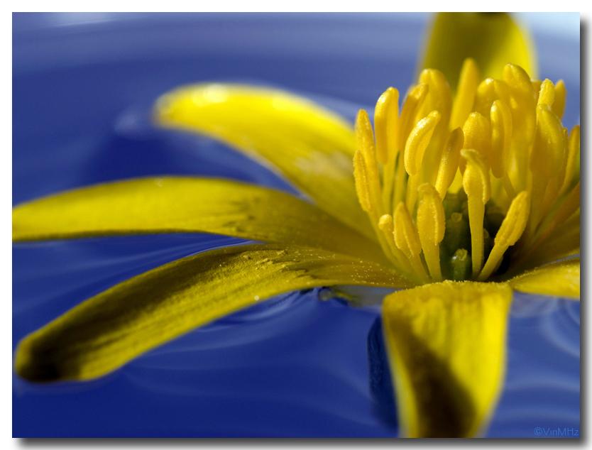 :: giallo & blu ::