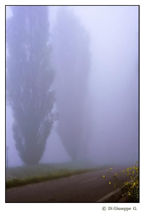 Giallo nebbia