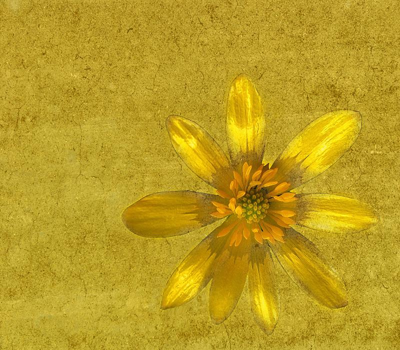 - giallo su giallo -