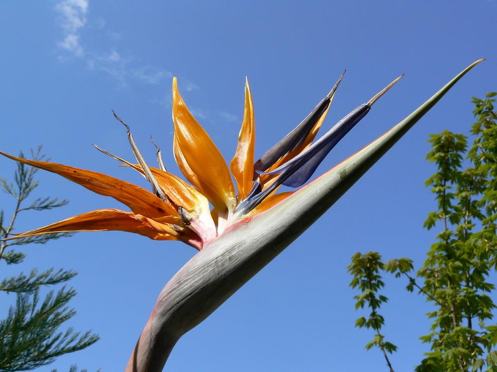 Giardini di Trautsmanndorff Merano
