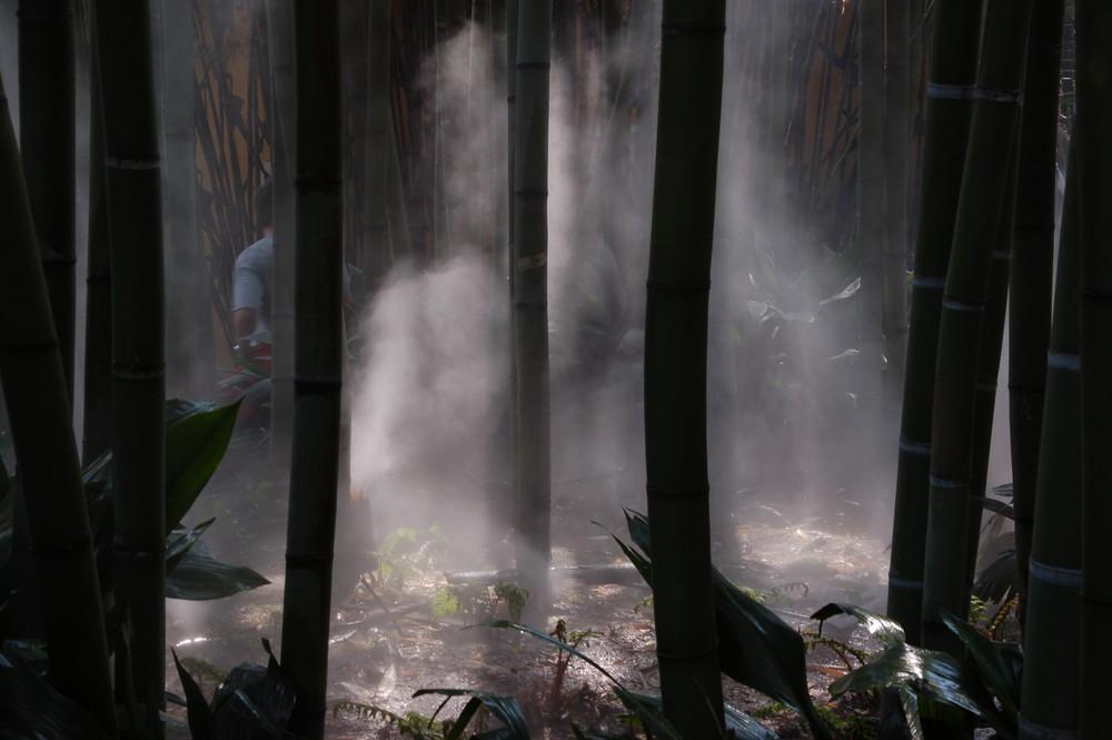 Giardino Botanico 3