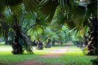 Giardino Camerun 2008