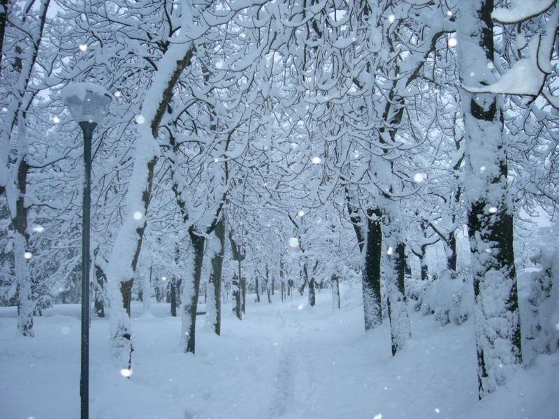 Giardino d 39 inverno foto immagini paesaggi boschi e - Giardini d inverno immagini ...