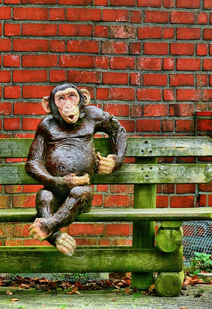 Gib dem Affen ENDLICH Zucker.....
