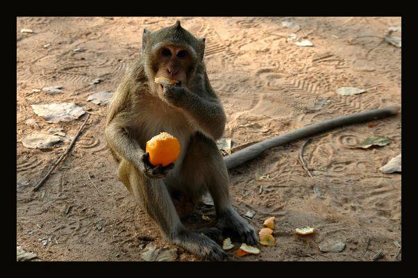 Gib dem Affen Futter...