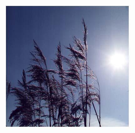 -gib mir Sonne-