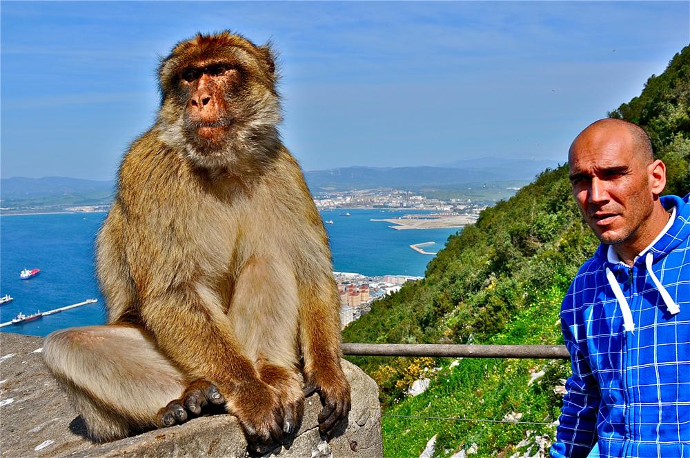 Gibraltar-Affen 04