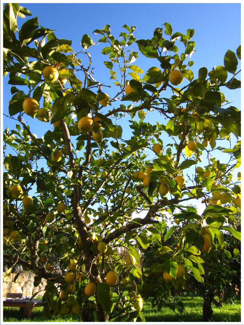 Gibt Dir das Leben Zitronen ...