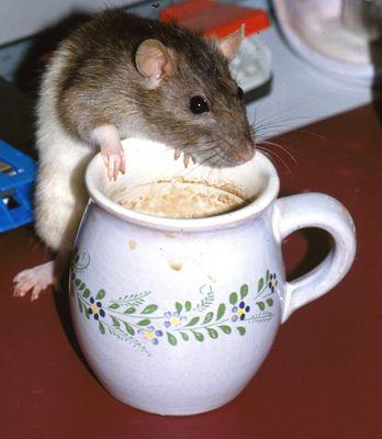 Gibts noch Kaffee?