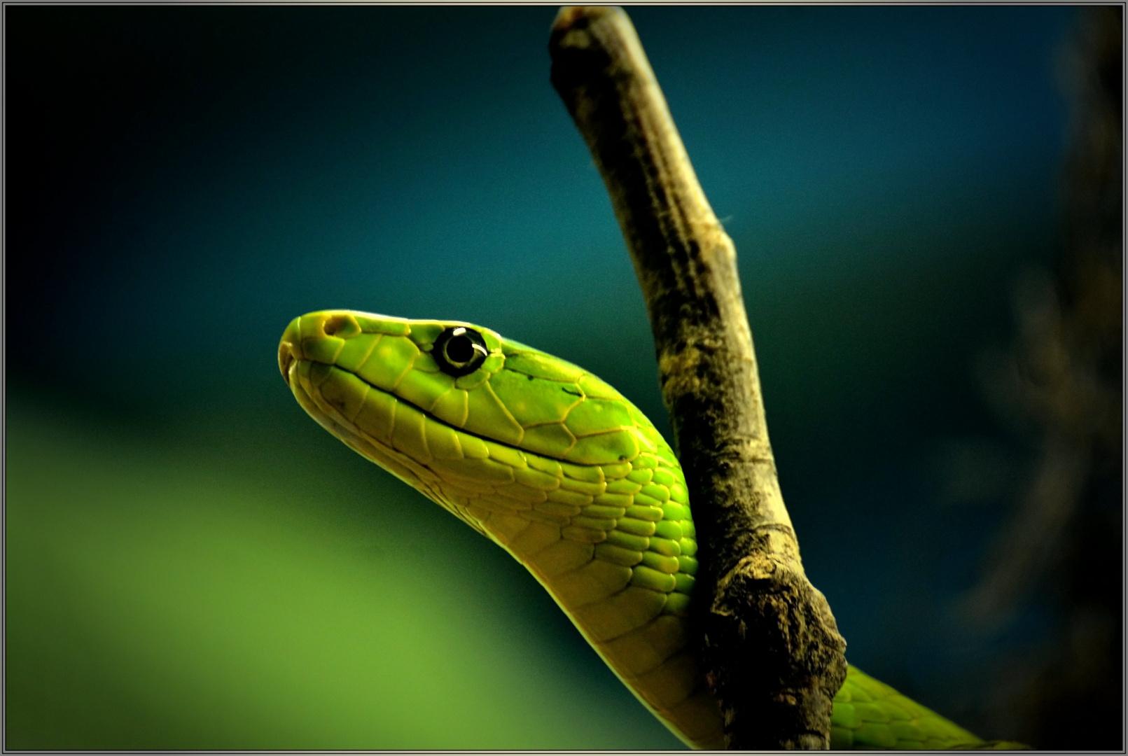 gift - grün