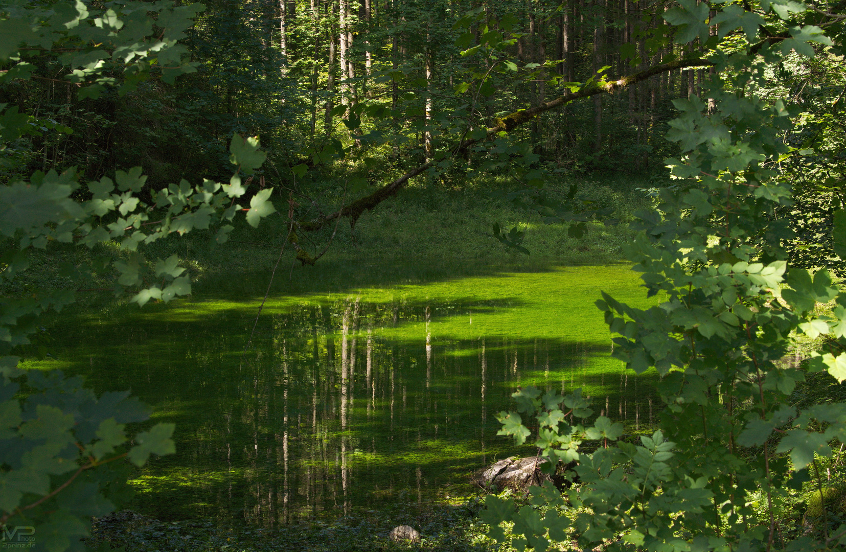Giftgrüner Waldtümpel