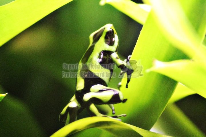 Giftiges Grün