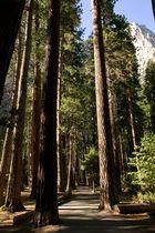 Giganten der Wälder