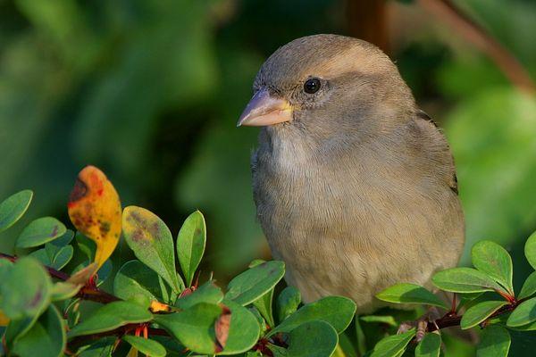 Gimp my Bird