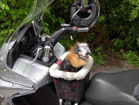 Gina, die Motorradbraut 2
