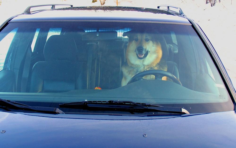 Gina fährt so gerne mit dem Auto