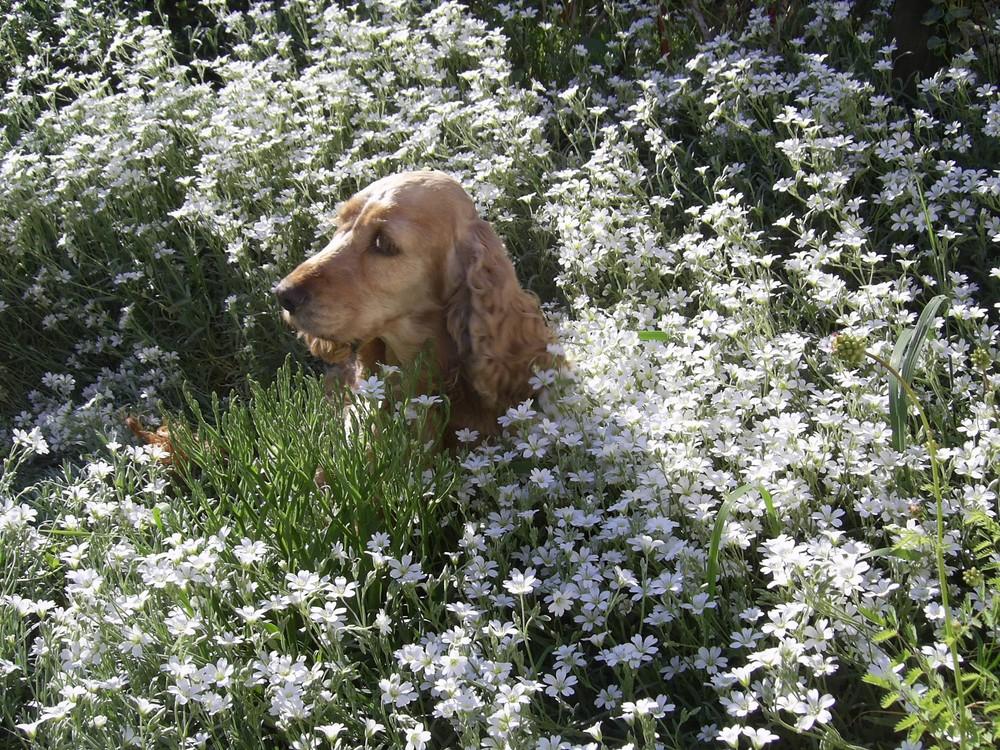 Gina im Blütenmeer