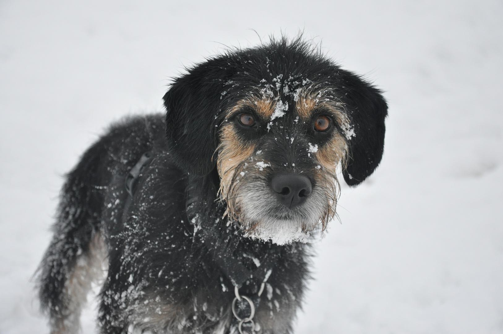 Gina im Schnee!!!!!!