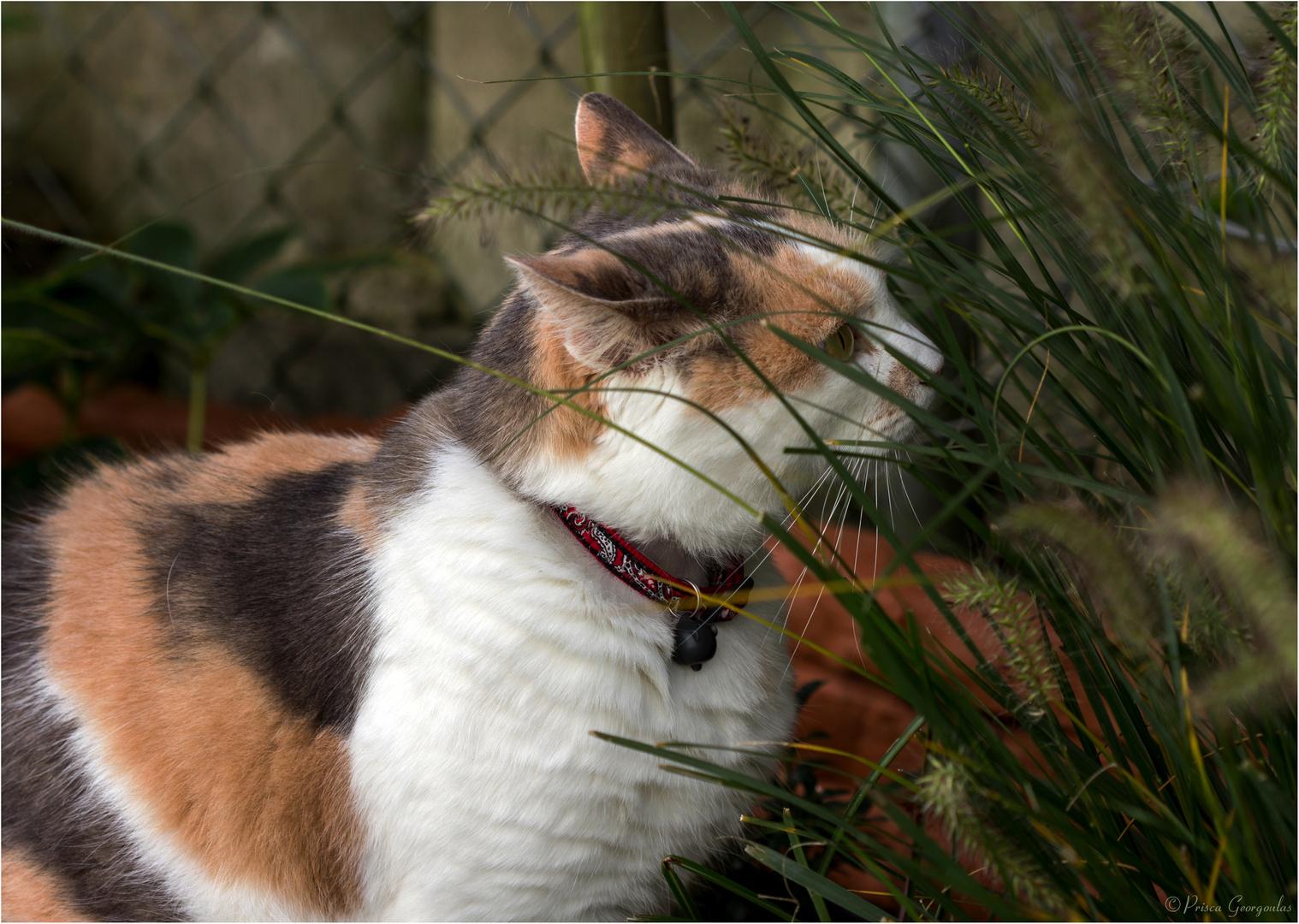 Gina tut sich gütlich am Lampenputzergras im Garten