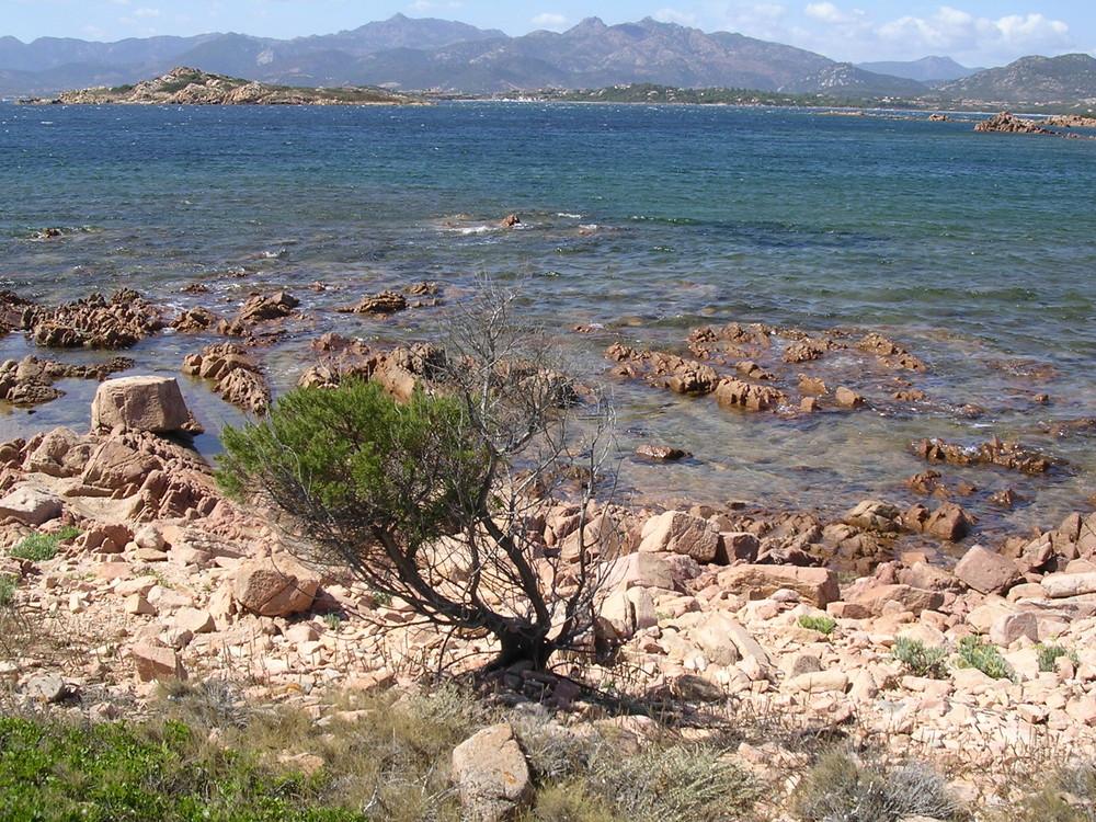 Ginepro solitario Capo coda cavallo Sardegna