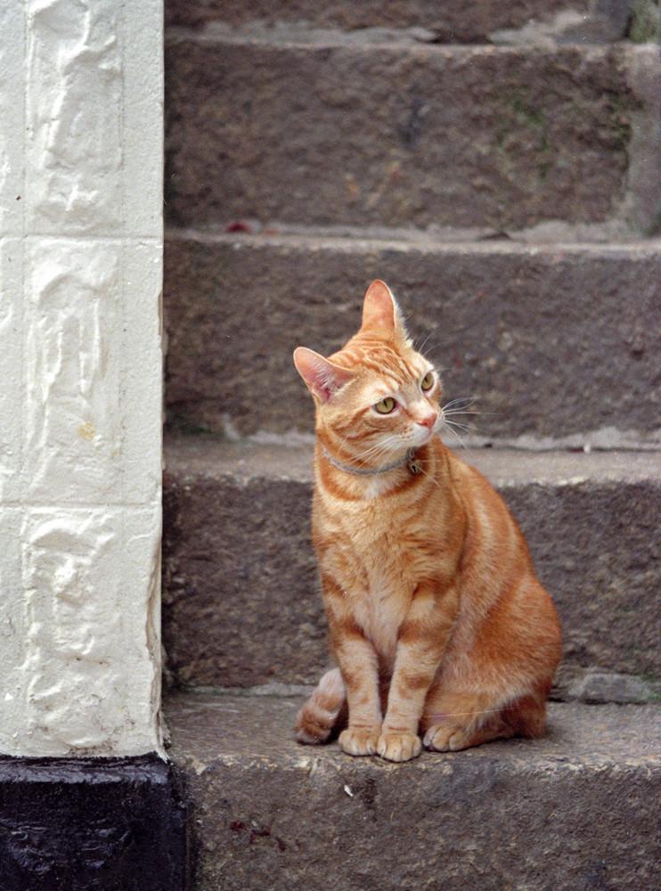 Ginger, etwas ratlos