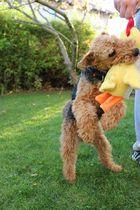 Ginger & Ihr Würgehahn 2