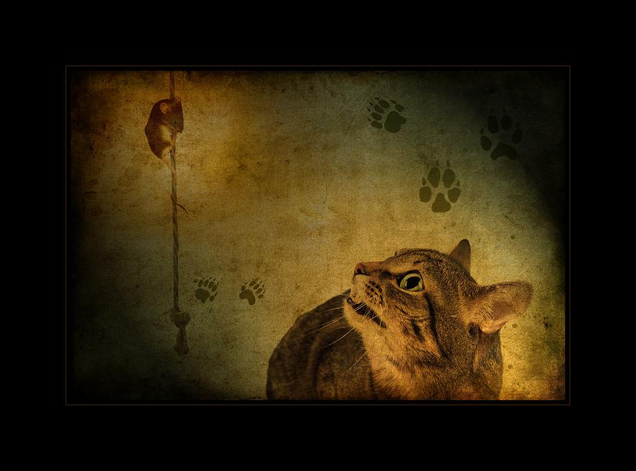 Giocare al gatto e topo :-)