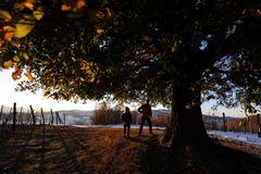 giochi sotto alla quercia