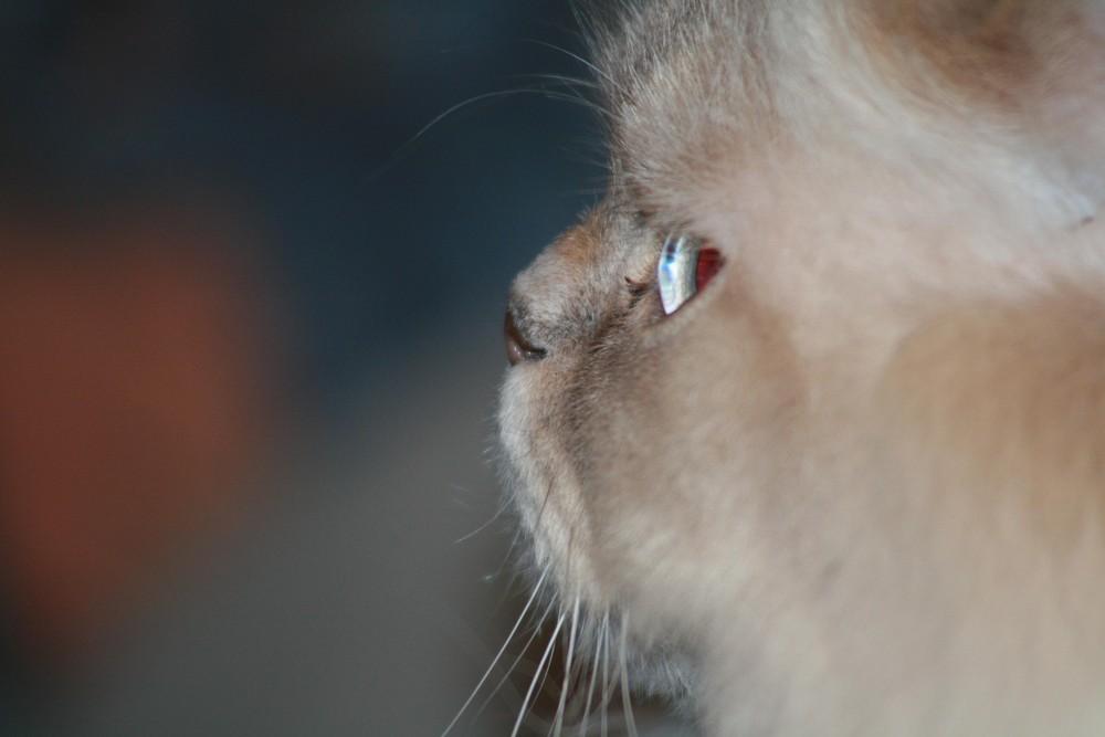 Giovanni im profil
