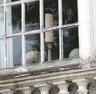 Gipsköpfe (Gesehen in der Bretagne)