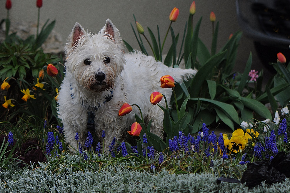 Gipsy's Blumenbeet von Sylvie Meier