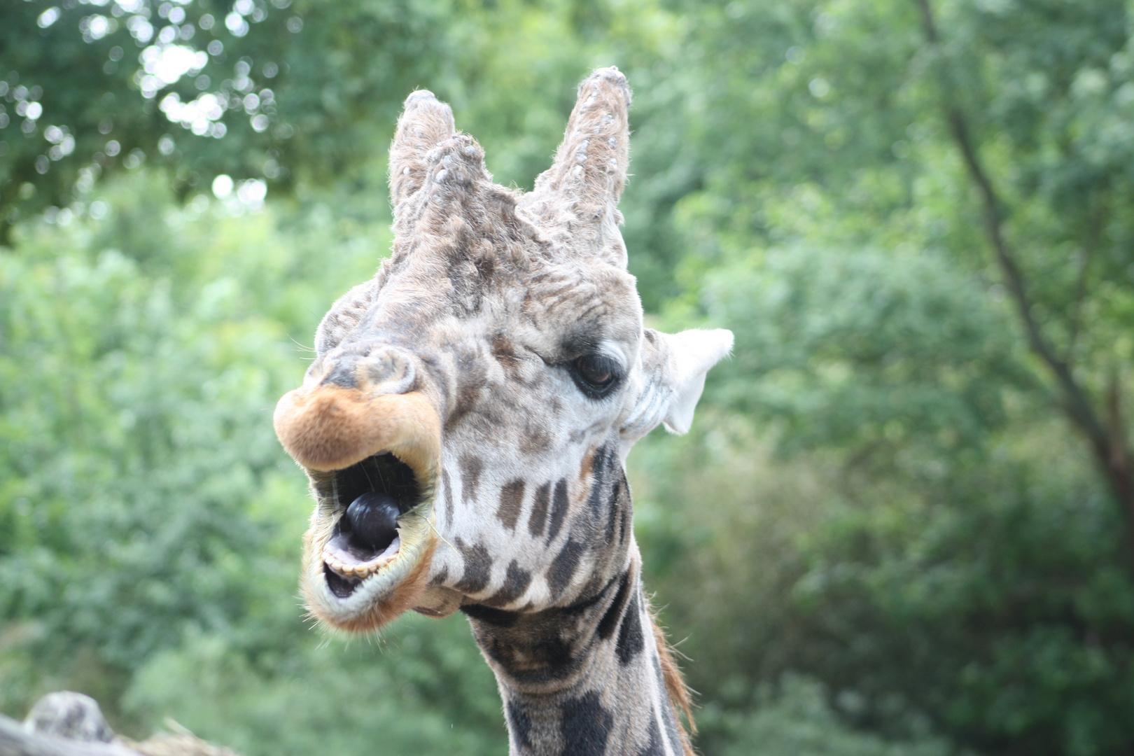 Giraffe eben... ;D