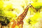 Giraffe mit Begleitung