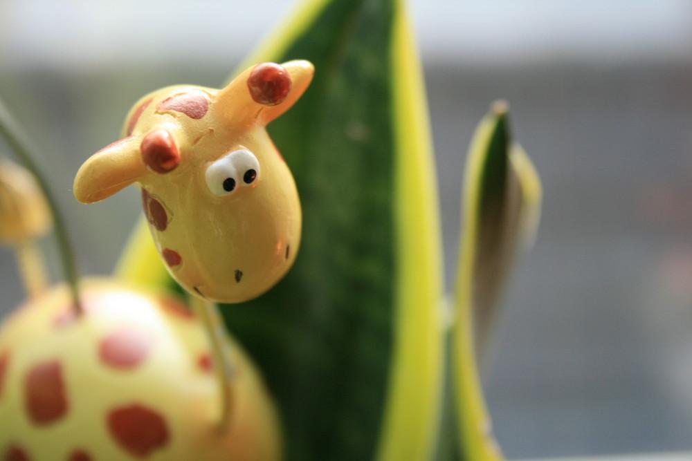 giraffe mo