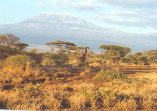 Giraffe vorm Kilimandscharo