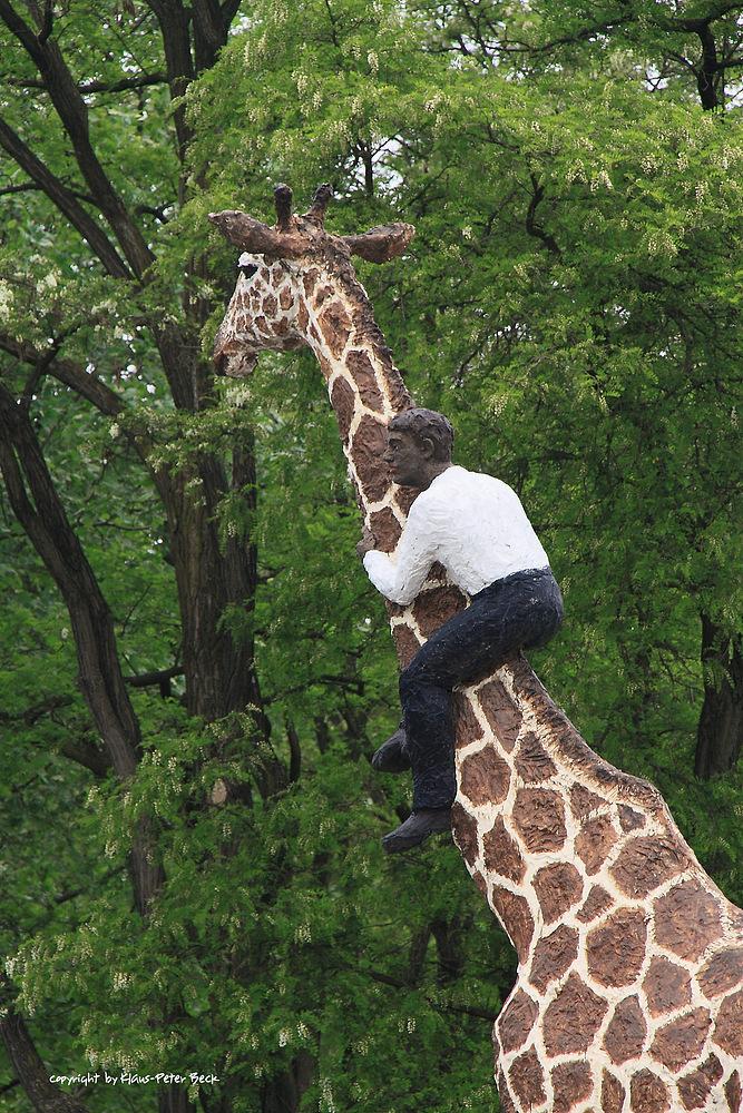 giraffen reiter foto bild tiere tier und mensch natur bilder auf fotocommunity. Black Bedroom Furniture Sets. Home Design Ideas