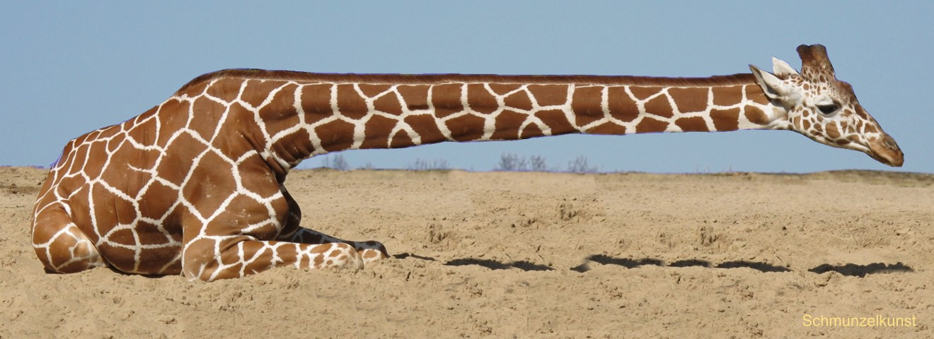 Giraffffe