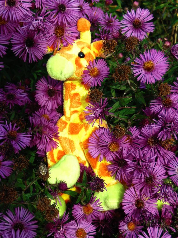 Giraffiti die Giraffe