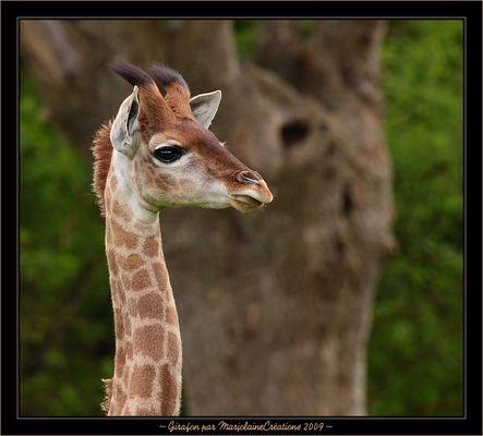 ~ Girafon ~