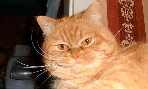 Gismo or Garfield?