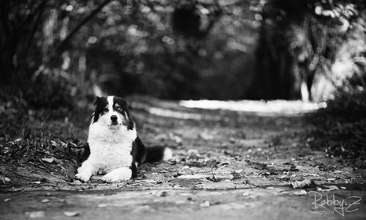 ...Givin the dog a bone...