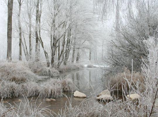 Givre en bourgogne hiver 2008/2009