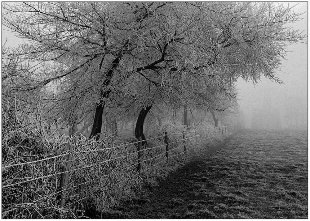 Givre et brouillard