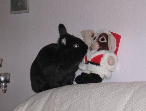 gizmo wünscht allen frohe weihnachten