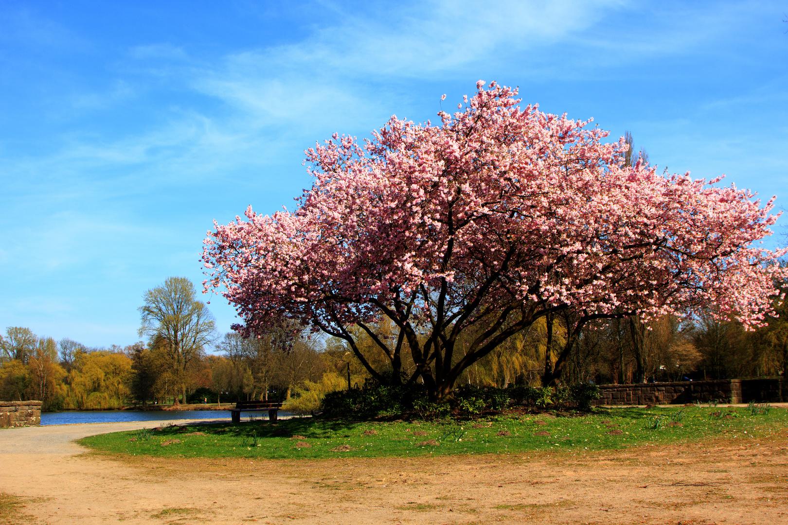 Gladbeck - Frühlingsfarben satt!