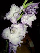 Gladiole aus dem Garten