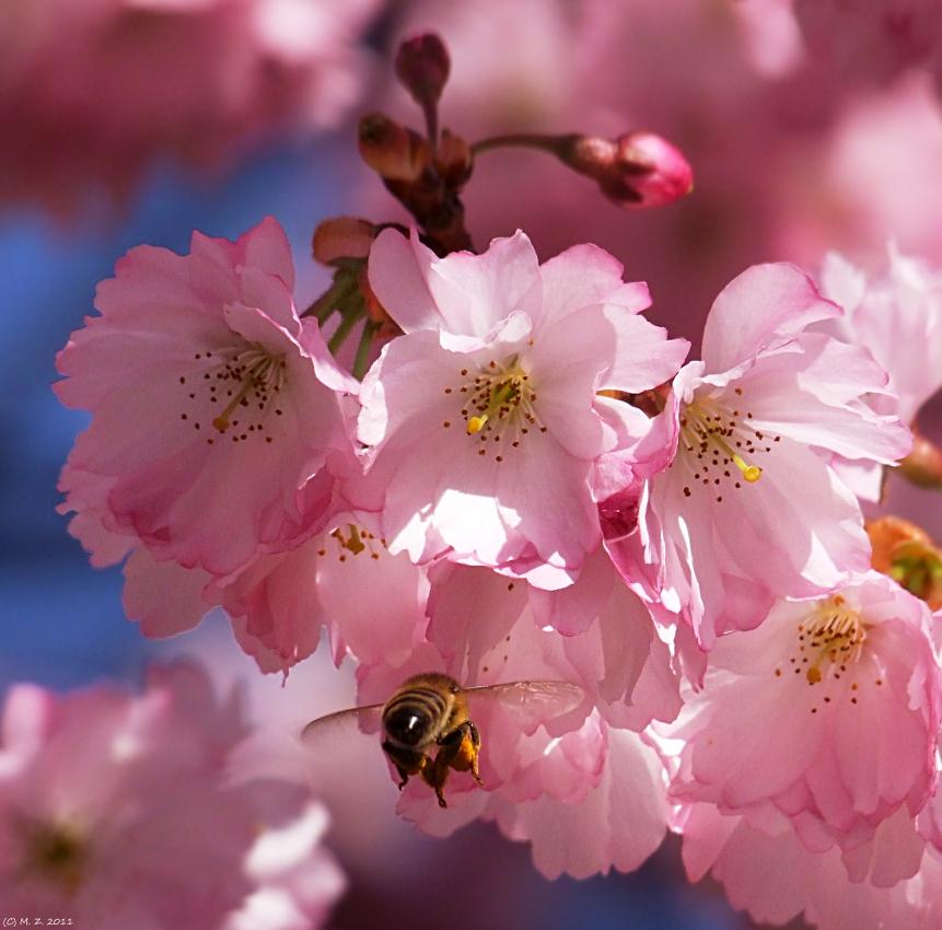 Glänzender Bienenpo ;-)