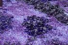 Glas flowers