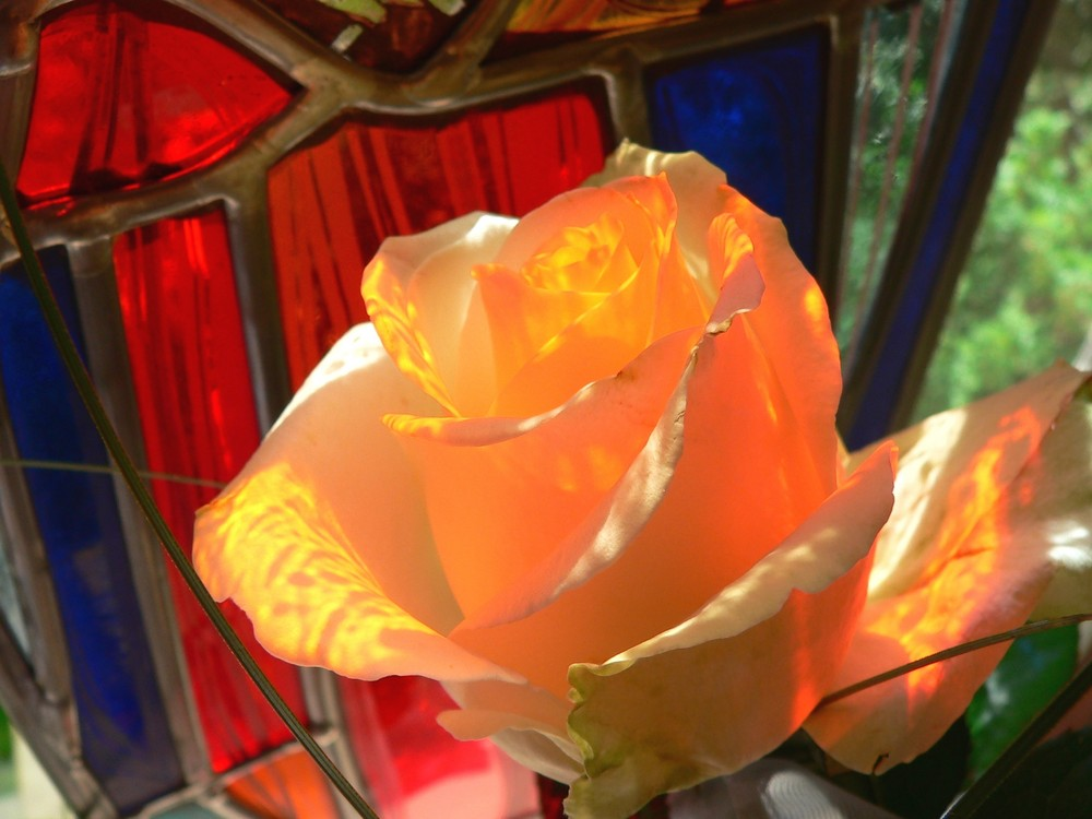 Glas-Rose