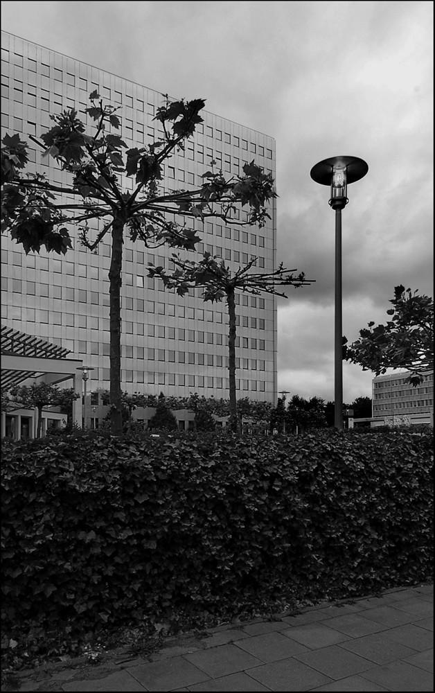 Glasfassade mit Baum